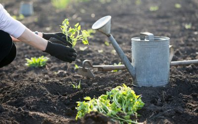 Guide: 10 ways to make the most of your garden in 2021